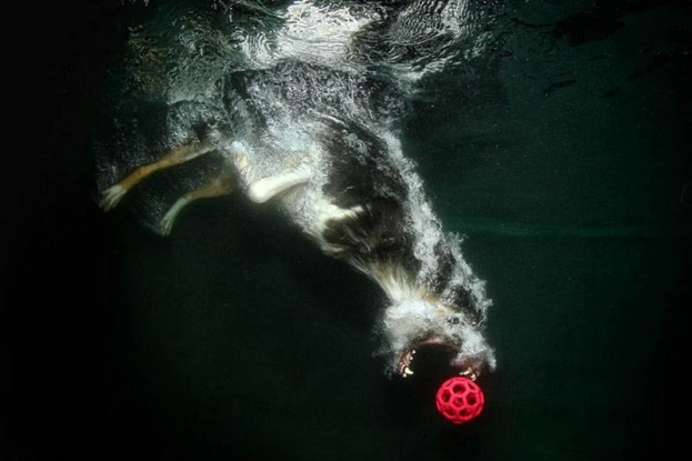 NIESAMOWITE zdjęcia psów pod wodą! (foto)